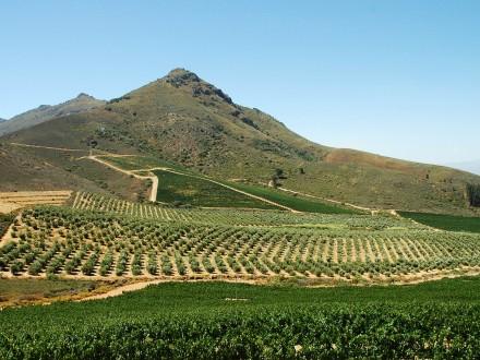 stellenbosch vintur