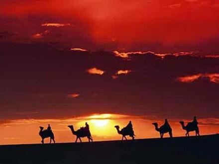 tunis kameler